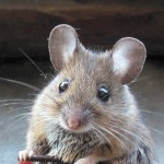 Rodent-Control-Pest-Busters