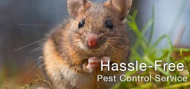 Pest Control Services Midlands & UK