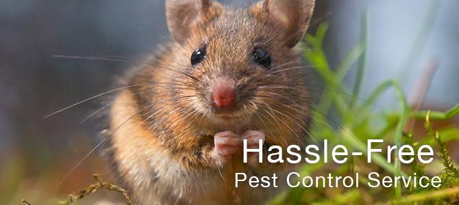 Pest Control Services Midlands & UK