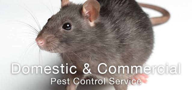 Rodent, Rat & Mouse Control Services UK