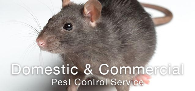 Pest Control Birmingham for rats and mice
