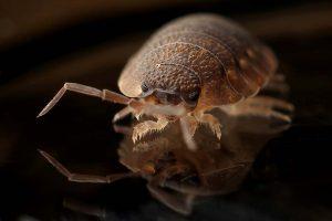 Pest Control Birmingham Council