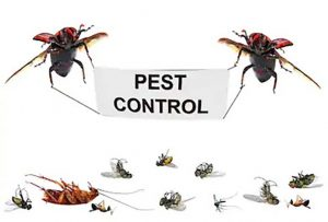 pest control Birmingham removal of insects