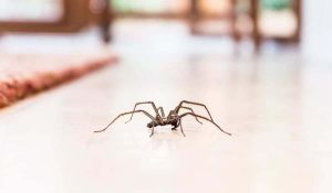 Keeping garden pests out of your home