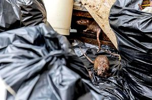 Birmingham pest control bins