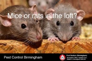 Mice removal from loft in Birmingham West Midlands UK