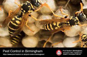 Pest Control in Birmingham