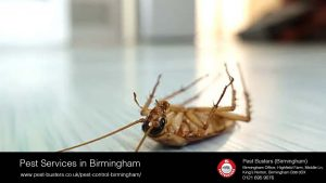 Pest services in Birmingham