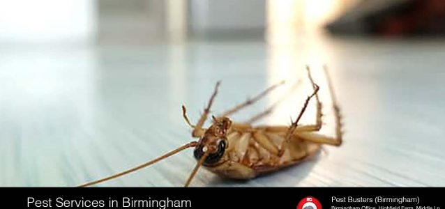 Pest services in Birmingham