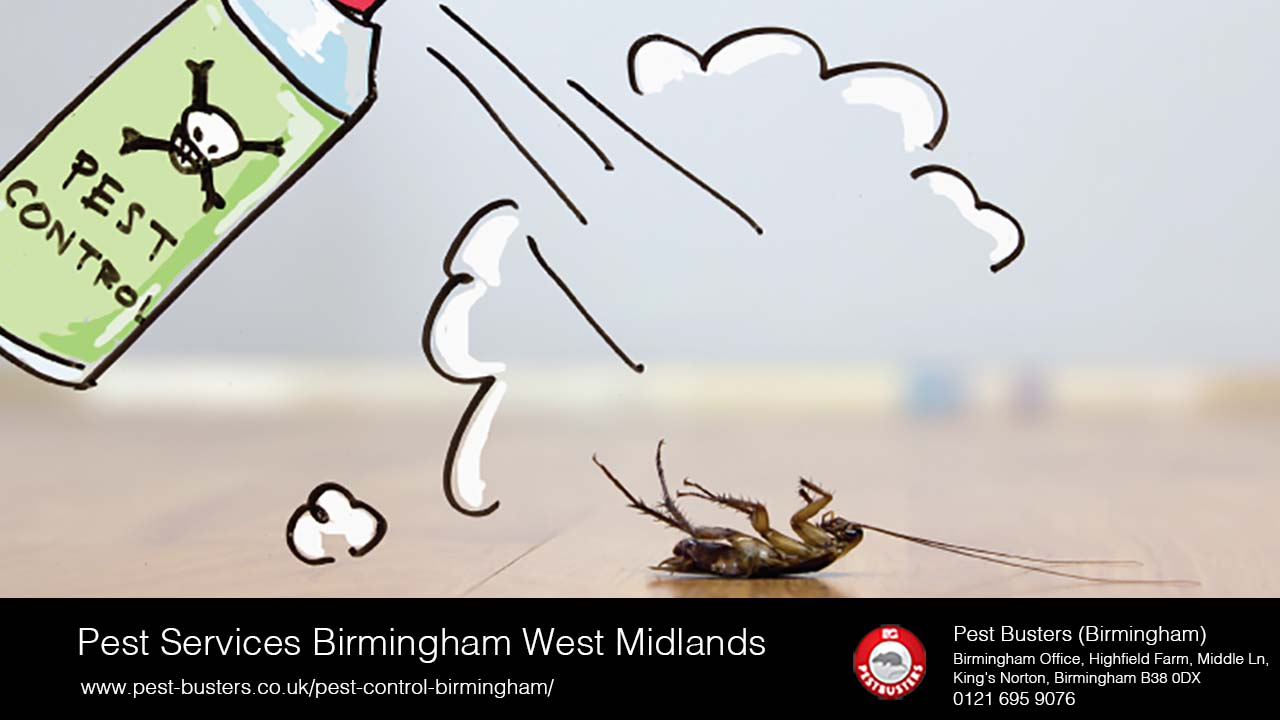 Pest services in the West Midlands