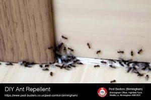 DIY Ant Reppellent