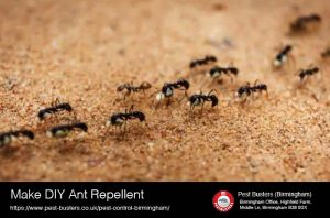 Make DIY Ant Reppellent