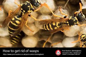 how to get rid of wasps birmingham